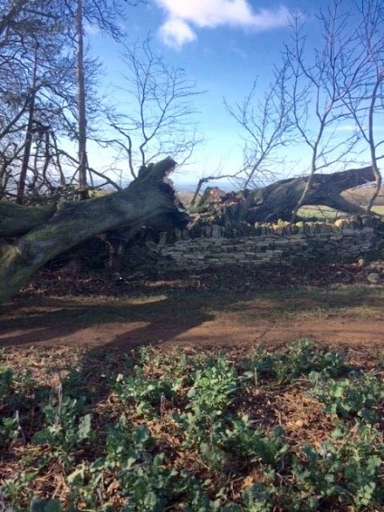 DORIS VISITS OVERBURY